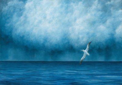 Stormlift, Wandering Albatross