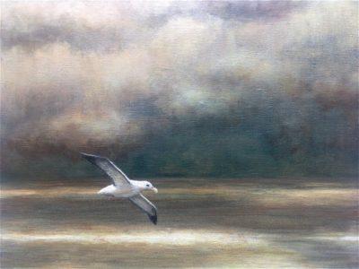 Wandering Albatross, Acrylic, 23x30cm (9x12inches)